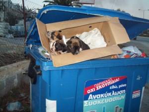 αδεσποτα στα σκουπιδια