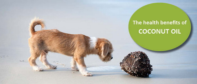 The_Health_Benefits_Of_Coconut_Oil_For_Dogs_-_Dogs_Naturally_Magazine