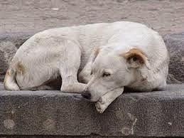 σκυλος