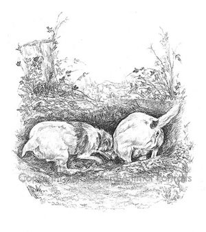 terriers_digging_pencil_print_l