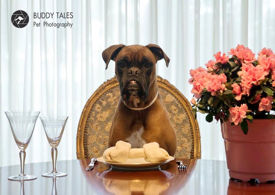 4e783d0fed4f Οι 13 καλύτερες (και χειρότερες) τροφές για σκύλους  VIDEO  - All ...