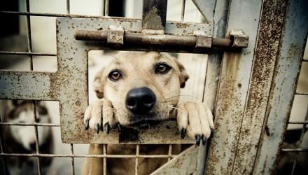 20080218085633_shelter_dogs_34_bibil_meitu_4