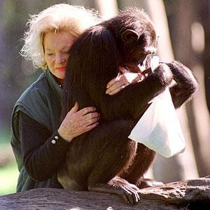 kalu-chimpanzee
