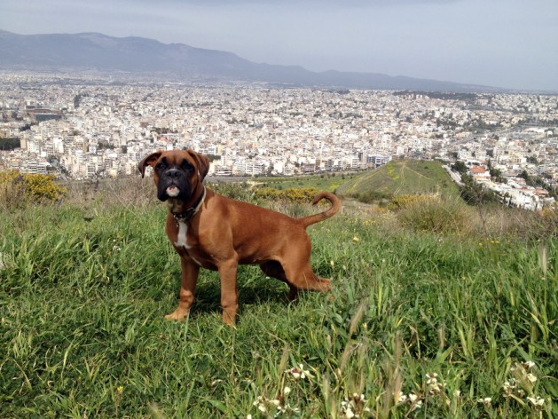 συμβουλές Σκύλος προστασία ζέστη