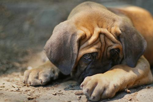 hiding-dog-2