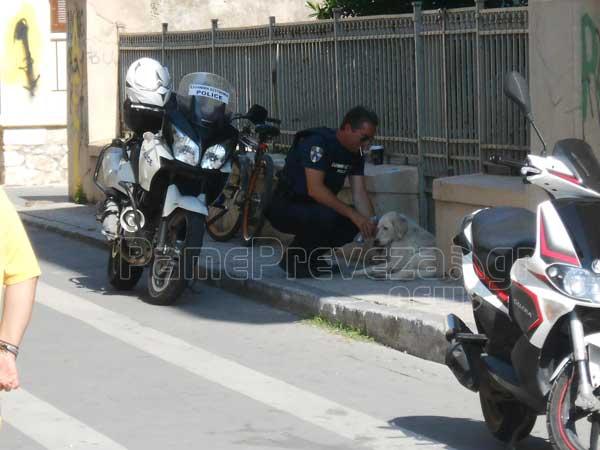 Αστυνομικός πρότυπο στη Πρέβεζα 2 (3)