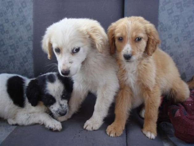 Χαλκιδική Δράσεις στείρωσης, σήμανσης και καταγραφής αδέσποτων ζώων