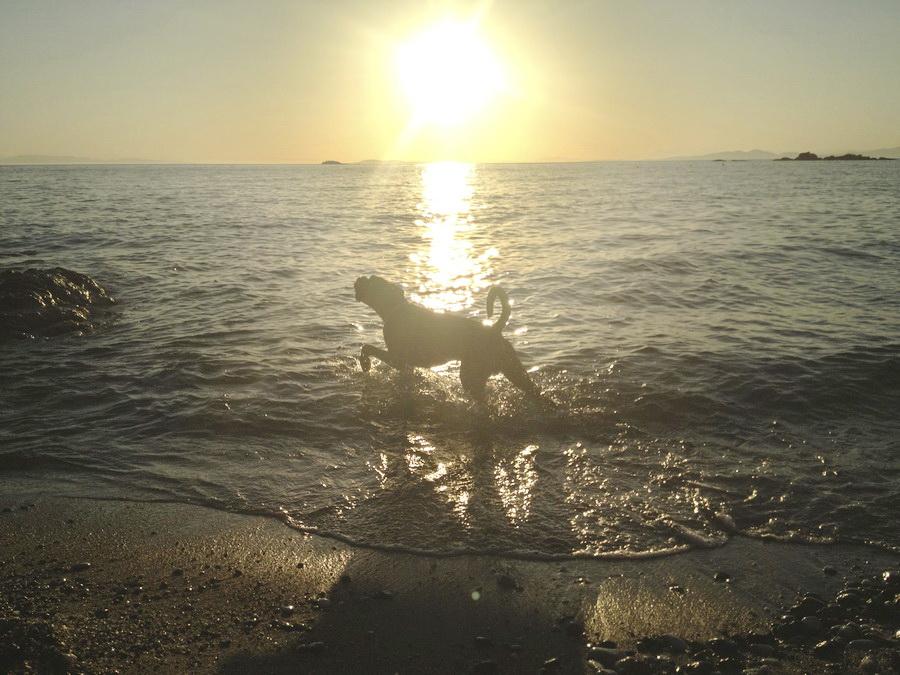 Αντηλιακό για σκύλους ,λόγοι και φυσικές προτάσεις 3