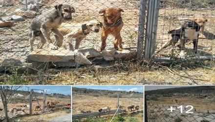 Βόλος Ελευθερώστε τα φυλακισμένα ζώα από τα κλουβιά του μπόγια