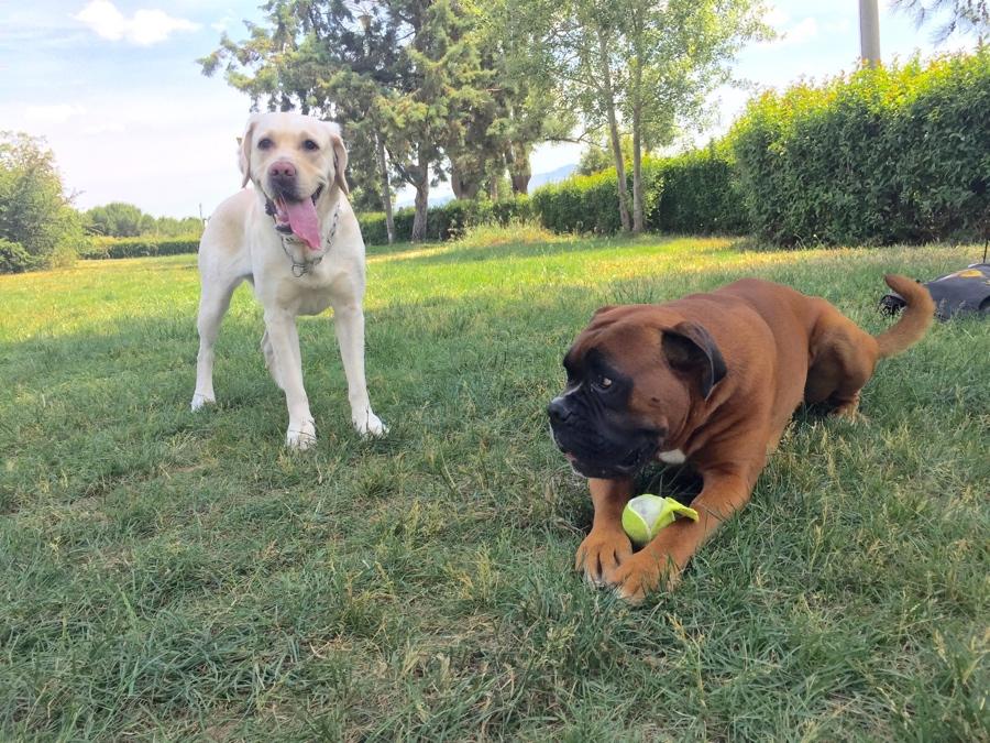 Εκπαίδευση σκύλων 5