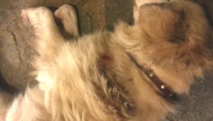 Ηράκλειο Κρήτη Πυροβόλησαν σκύλους στην πλατεία Σινάνη