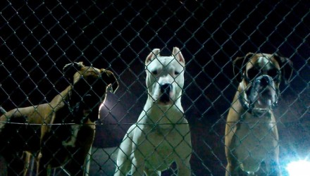 Σκύλος κατέστρεψε απόδραση κρατουμένων από φυλακή στη Κέρκυρα