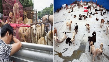 ΑποκάλυψηΣκυλιά που σώθηκαν από την Yulin πεθαίνουν τώρα σε κέντρο διάσωσης στη Κίνα
