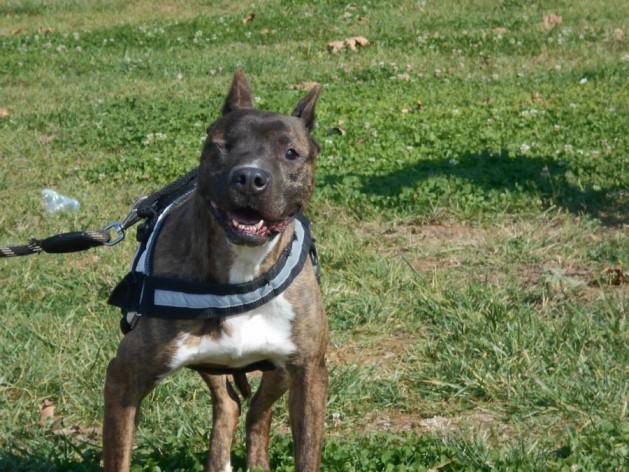 Ηλικιωμένος σκύλος 7 συμβουλές για να τον διατηρήσετε υγιή και ευτυχισμένο (2)