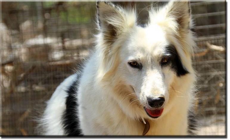 Ηλικιωμένος σκύλος7 συμβουλές για να τον διατηρήσετε υγιή και ευτυχισμένο (2)