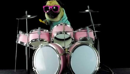 Σκύλος Pug ντράμερ δίνει ρεσιτάλ στο Enter Sandam των Metallica