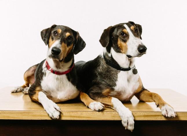 Κλωνοποίηση σκύλου με 90.000 ευρώ  (2)