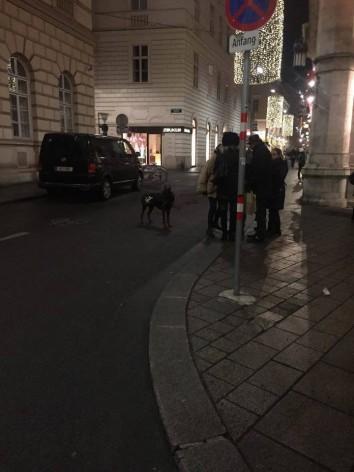Σκύλος στη Βιέννη  Ιανουάριος 2016  (4)