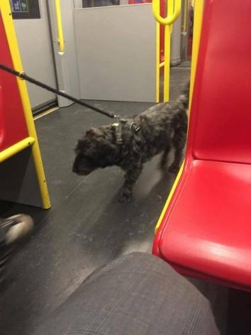 Σκύλος στη Βιέννη  Ιανουάριος 2016  (5)
