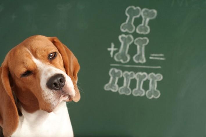 Θέλεις να μάθεις πόσο έξυπνος είναι ο σκύλος σου;