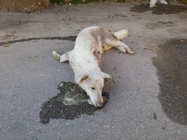 Μαζική δολοφονία αδέσποτων ζώων στη Βέροια [Σκληρές εικόνες]3