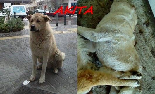 Μαζική δολοφονία αδέσποτων ζώων στη Βέροια [Σκληρές εικόνες]4