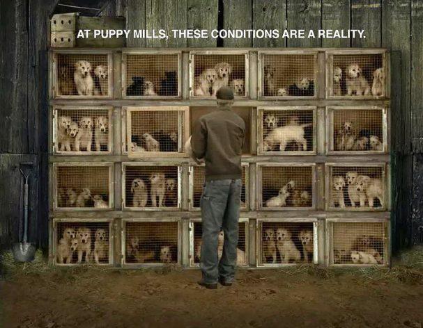 Απαγορεύτηκε η πώληση σκύλων, γατιών και κουνελιών από pet shop και ιδιώτες στο Λος Άντζελε