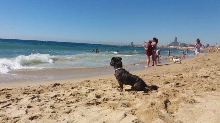 Η πρώτη pet friendly παραλία και με το νόμο (2)
