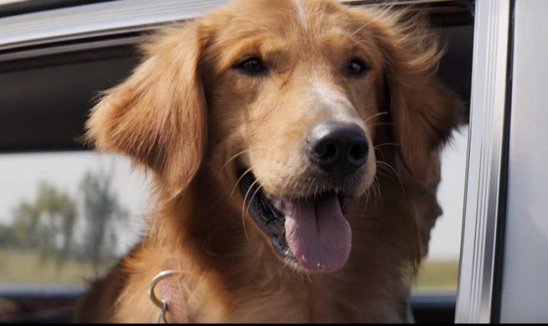 Ο σκοπός ενός σκύλου A Dog's Purpose - Official Trailer (HD) (5)