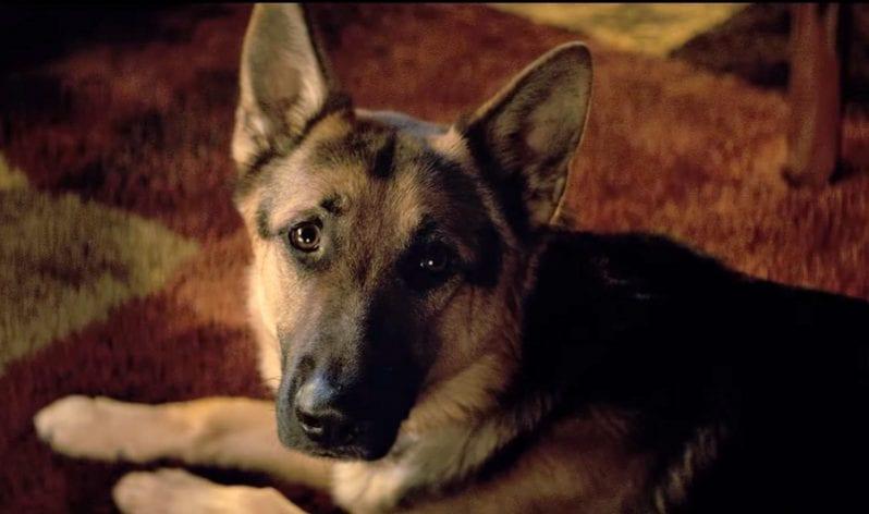 Ο σκοπός ενός σκύλου A Dog's Purpose - Official Trailer (HD)
