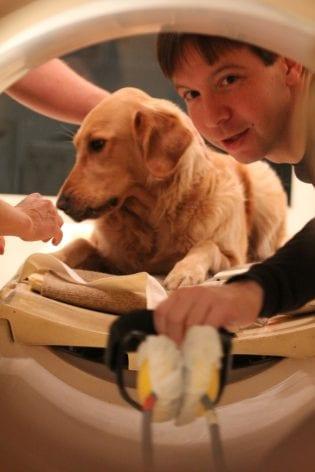 Τα σκυλιά καταλαβαίνουν πραγματικά την ανθρώπινη γλώσσα, σύμφωνα με νέα έρευνα (3)