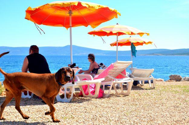 Pet-friendly-beach-bar-προσφέρει-παγωτά-και-μπύρες-σε-σκύλους-σε-pet-friendly-παραλία-5
