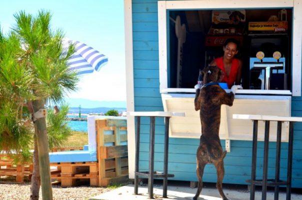 Pet friendly beach bar προσφέρει παγωτά και μπύρες σε σκύλους σε pet friendly παραλία 7