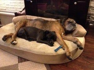 integrity-orthopedic-dog-bed-300x225
