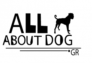 All About Dog