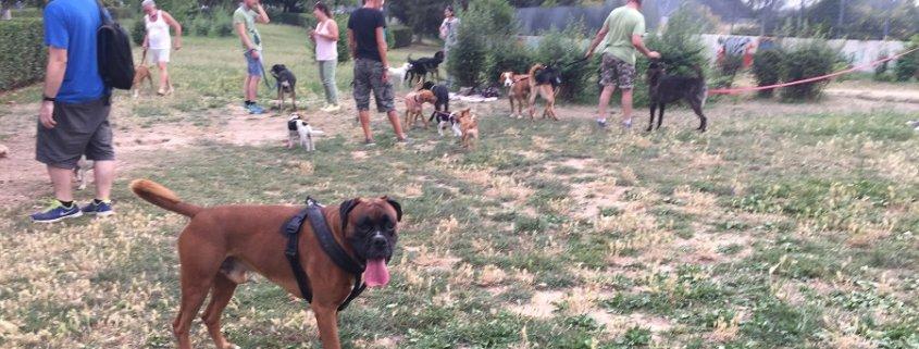 πάρκα σκύλων
